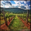 Daily Photo: Virginia Wine Country