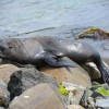 Daily Photo: Sea Lion Lounging