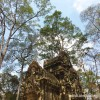 Daily Photo: Angkor Forest