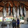 Daily Photo: Tuna for Sale
