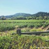 Daily Photo: Sonoma Winery Landscape